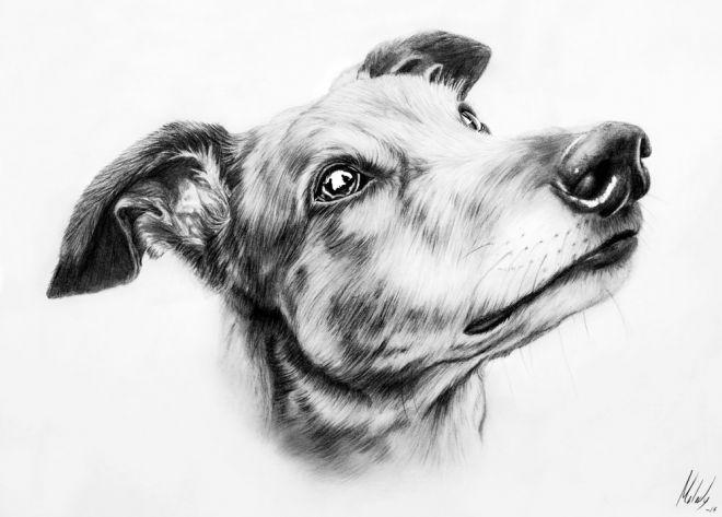 greyhound_melody_sundberg