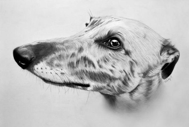 greyhound_melody_sundberg_2