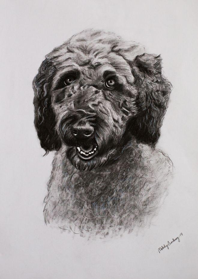 hund-s